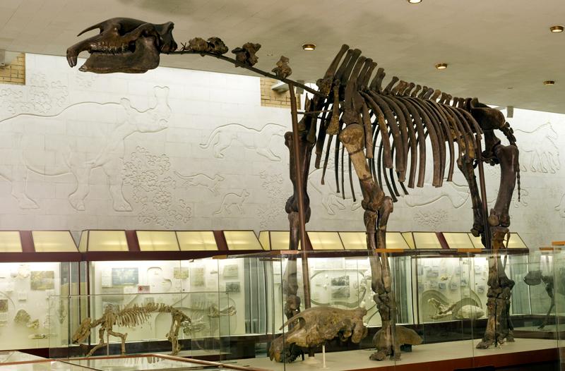 музей динозавров в москве стоимость билетов
